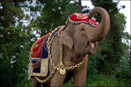 Qu'a de spécial cet éléphant ?