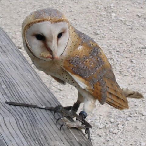 Et ce chouette oiseau ?