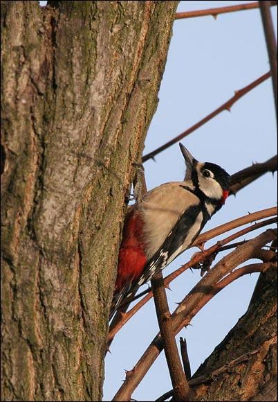 Et commment s'appelle ce petit oiseau ?