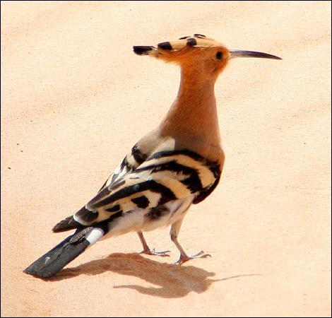 Et cet oiseau au long bec ?