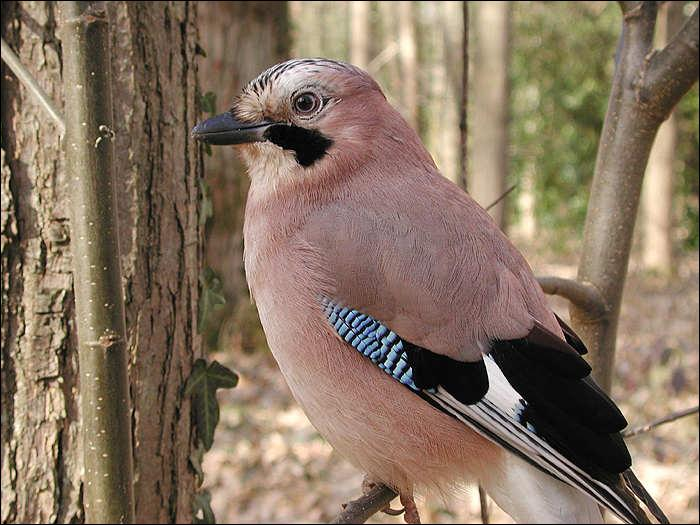 Drole d'oiseau mais comment s'appelle-t'il ?