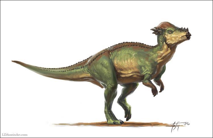 Comment s'appelle ce dinosaure au gros crâne ?
