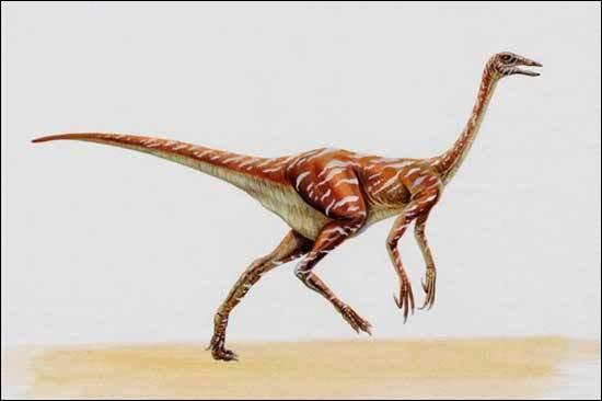 Comment s'appelle le plus rapide des dinosaures ?