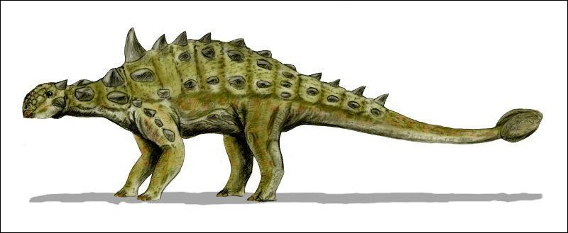 Comment s'appelle ce dinosaure cuirassé ?
