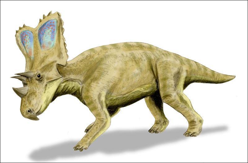 Comment s'appelle cet autre dinosaure à corne ?