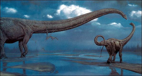 Comment s'appelle le diunosaure qui possède le plus long cou ?