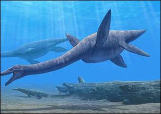 Comment s'appelle ce reptile marin ?