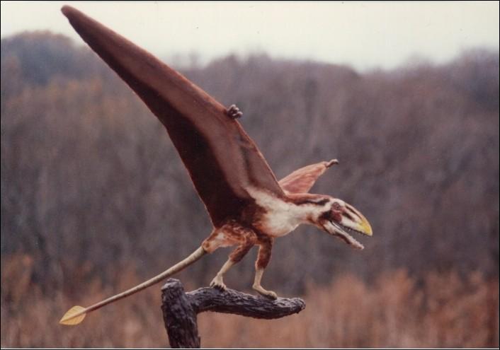Comment s'appelle cet autre reptile aérien ?