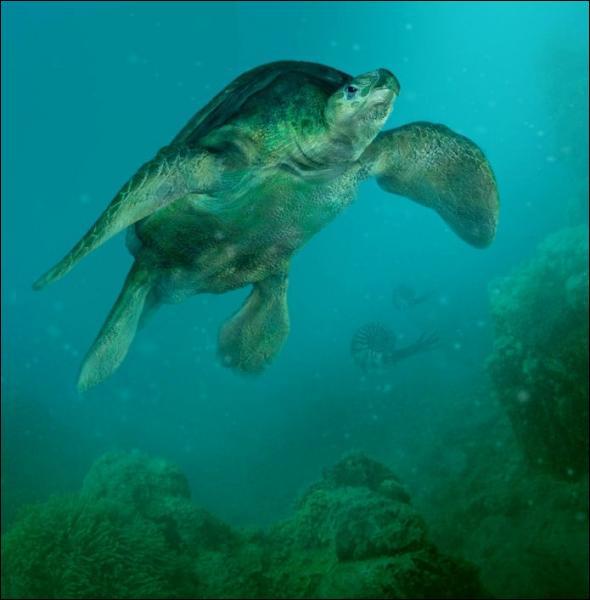 Comment s'appelle l'ancêtre des tortues ?