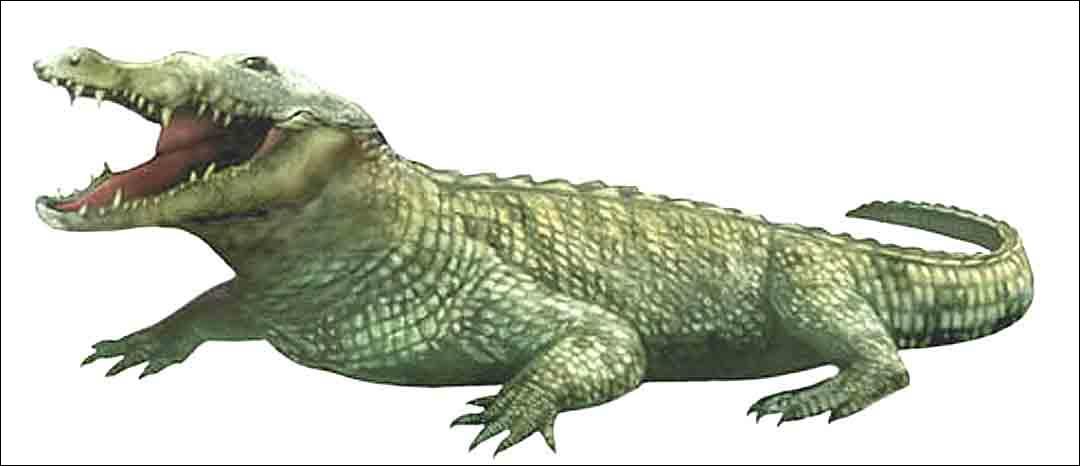 Comment s'appelle l'ancêtre des crocodiles ?