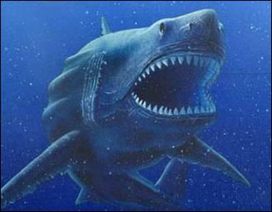 Comment s'appelle l'ancêtre des requins ?