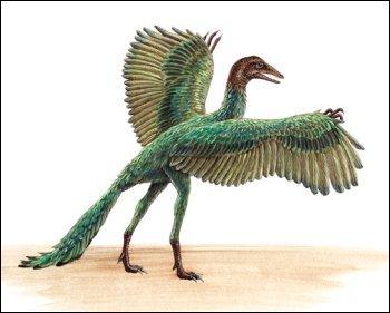 Comment s'appelle le premier oiseau ?