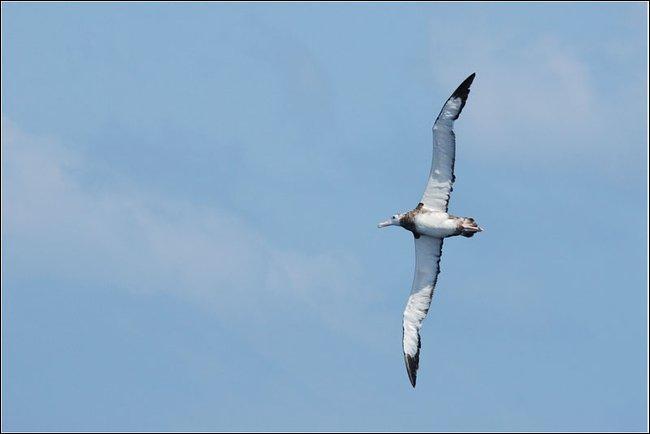 Pour rester dans le domaine des oiseaux, lequel a la plus grande envergure ?