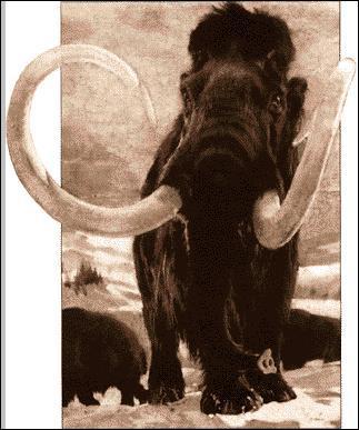 Comment s'appelle cet éléphant préhistorique ?