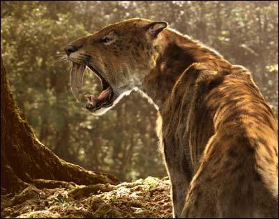 Quel est l'autre nom du tigre à dents de sabre ?