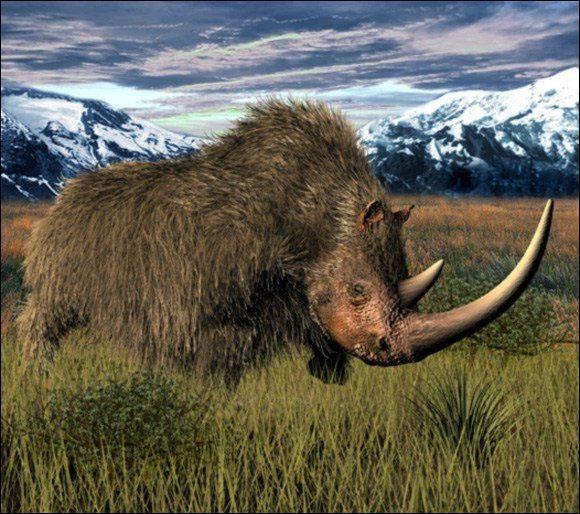 Comment s'appelle ce rhinocéros préhistorique ?