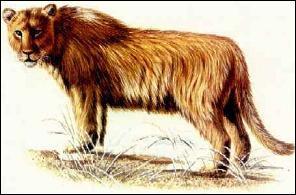 Comment s'appelle ce lion préhistorique ?