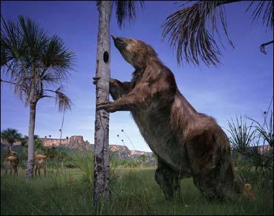 Comment s'appelle ce paresseux préhistorique ?