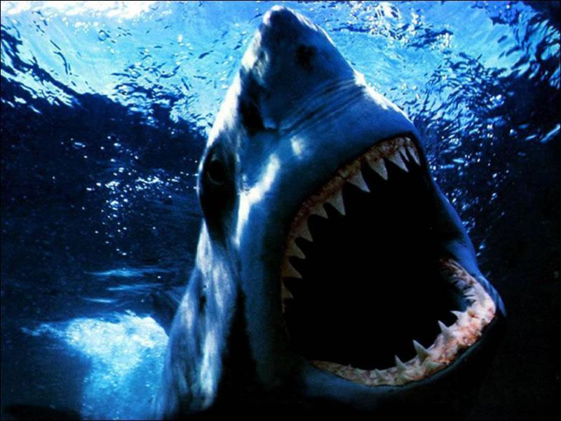 Lequel de ces trois mammifères marins a entre 80 et 100 dents ? (attention, la photo n'est qu'une illustration, elle ne donne pas forcément la réponse)