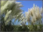 Quizz photos en vrac n 17 quiz photos for Plante plumeau rouge