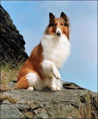 Comment s'appelle ce chien fidèle très connu ?