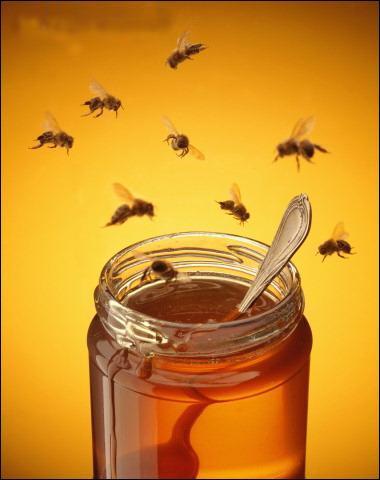 Combien de miel donne une maison d'abeilles ?