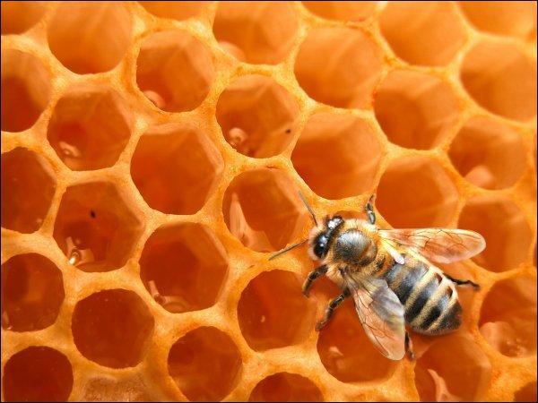 Combien une alvéole d'abeille a-t-elle de côté ?