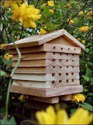 Comment appelle-t-on l'habitation des abeilles ?