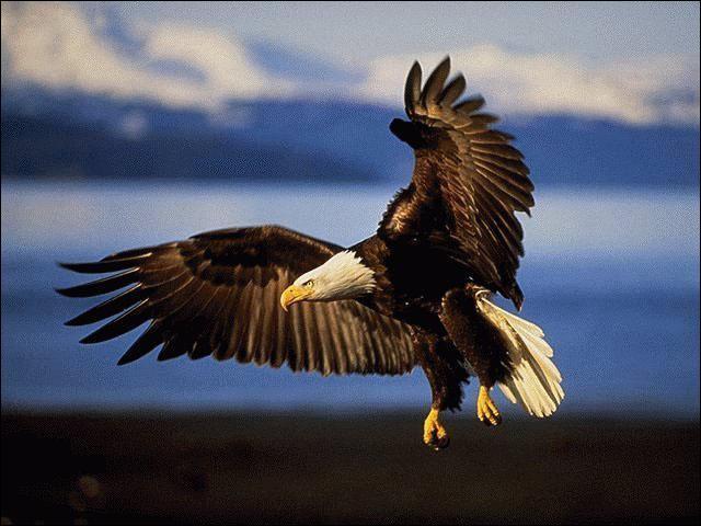 Quelle est la femelle de l'aigle ?