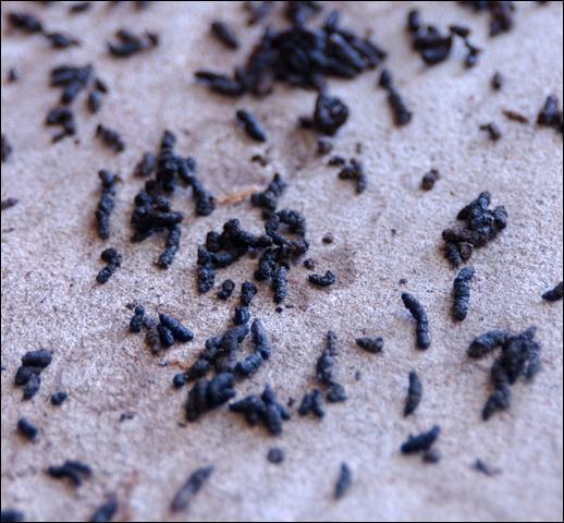 Quel est le nom de l'engrais formé d'excréments et de cadavres d'oiseaux fort répandu sur le littoral américain du Pacifique ?