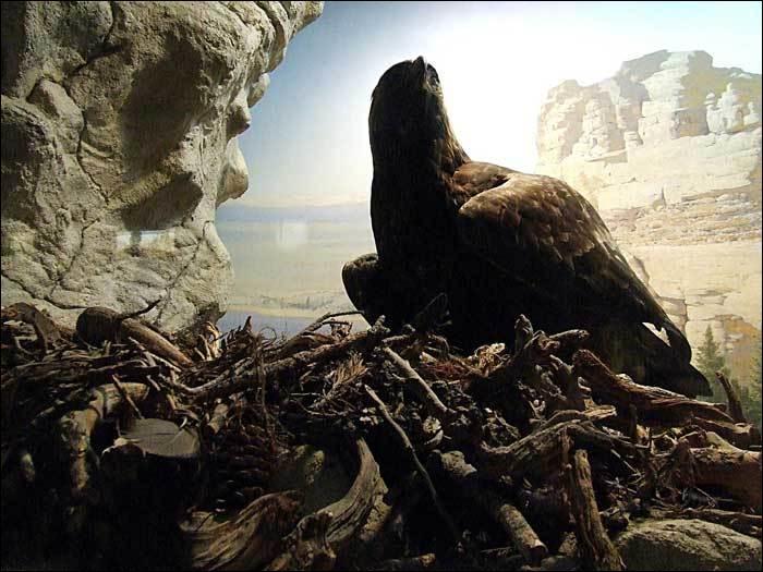 Comment s'appelle le nid de l'aigle ?
