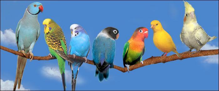 Combien d'espèces d'oiseaux existe-t-il sur la planète environ ?