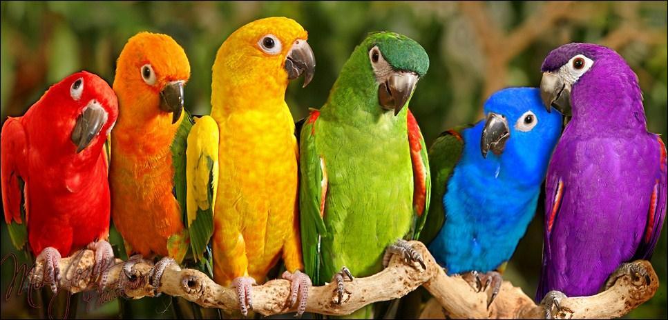 Comment s'appelle le plus grand perroquet ?