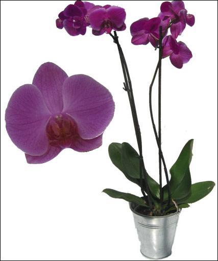Lorsque l'on fête ses noces d'orchidée, on est mariés depuis :