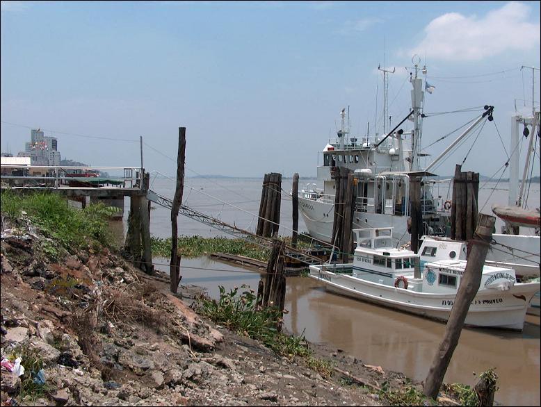 Le Golfe de Guayaquil en Equateur est connu pour ses nombreuses fermes d'aquaculture d'un certain crustacé. Lequel ?