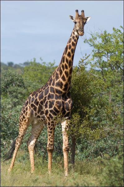 Quelle est la première lettre du nom de cet animal ?