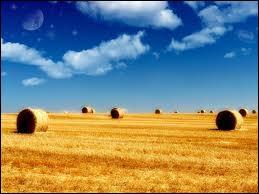 Combien de litres d'eau nécessite la production d'un kilo de céréales ?