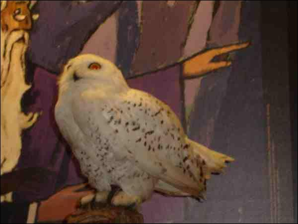 Hedwige est ...