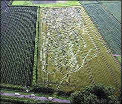 Qu'est-ce qu'un Belge armé dans un champ de blé ?