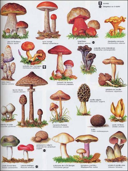 Les champignons toxiques ont tous une odeur désagréable ?