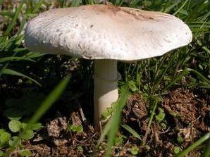 La toxicité des champignons