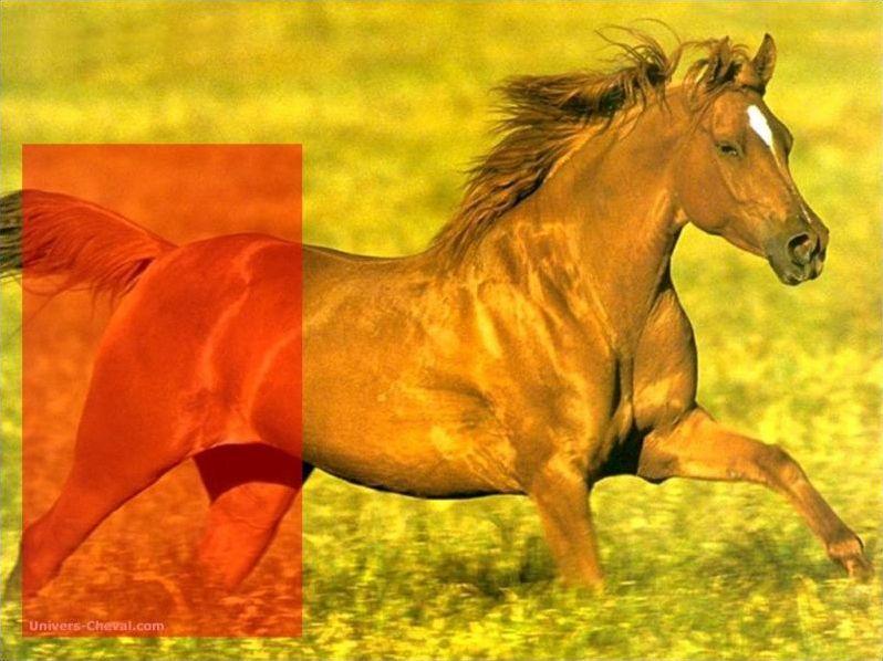 Les parties du corps du cheval