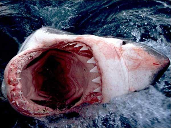 Jaws ?