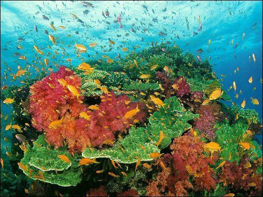 Les coraux qui forment les récifs de corail sont des animaux.