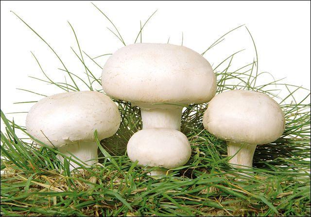 Quel est le nom de la partie visible (champignon) ?