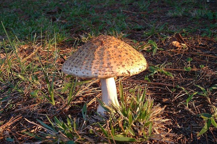 Les champignons série 2