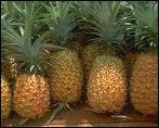 L'ananas est un. .