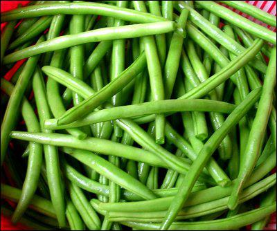 Le haricot vert est un. .
