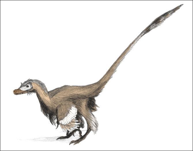Quelle est la taille et quel est le poids maximum du Velociraptor ?