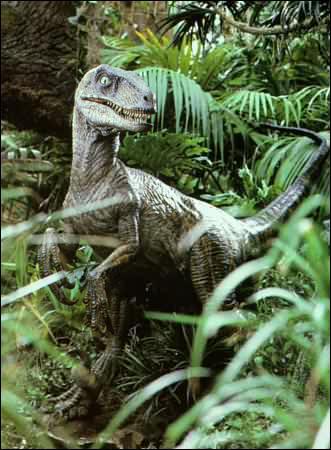 Ce dinosaure, est-il un Velociraptor ?